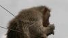 ಯಾದಗಿರಿ : ಹುಣಸಿಹೊಳೆ ಗ್ರಾಮದಲ್ಲಿ ಕೋತಿಗಳ ಕಾಟ