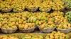 ಕೊಪ್ಪಳ : ಮಾವು ಮೇಳ, 100ಕ್ಕೂ ಅಧಿಕ ಬಗೆಯ ಹಣ್ಣು ಸವಿಯಿರಿ