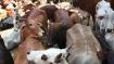 ಮೈಸೂರಿನಲ್ಲಿ ಕಸಾಯಿಖಾನೆಗೆ ಸಾಗಿಸುತ್ತಿದ್ದ 34 ಜಾನುವಾರುಗಳು ವಶ