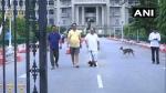 ವಿಧಾನಸೌಧ ಆವರಣದಲ್ಲೂ ಬಿಜೆಪಿ ಶಾಸಕರ ಕಸರತ್ತು ಪ್ರದರ್ಶನ