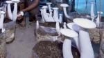 ಸ್ವಾವಲಂಬಿ ಜೀವನಕ್ಕೆ ಆಧಾರವಾದ ಅಣಬೆ ಬೇಸಾಯ