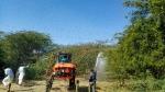 ದೇಶದ ವಿವಿಧ ರಾಜ್ಯಗಳಲ್ಲಿ ಮರುಭೂಮಿ ಮಿಡತೆ ದಾಳಿ: ಬೆಳೆಗಳ ನಾಶ