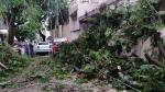 ಬೆಂಗಳೂರಲ್ಲಿ ಭಾರಿ ಗಾಳಿ ಮಳೆಗೆ ಧರೆಗುರುಳಿವೆ 150ಕ್ಕೂ ಹೆಚ್ಚು ಮರಗಳು