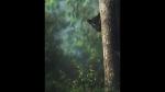 ಕಬಿನಿ ಹಿನ್ನೀರಿನ ಕಪ್ಪು ಚಿರತೆಯ ಹಳೇ ಫೋಟೊ ವೈರಲ್