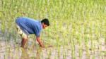 ರಾಯಚೂರಿನಲ್ಲಿ 30 ರೈತರಿಗೆ ಮಕ್ಮಲ್ ಟೋಪಿ ಹಾಕಿದ ಭತ್ತದ ವ್ಯಾಪಾರಿ!