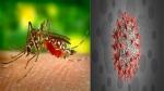 ಹುಷಾರ್: ಭಾರತದ 11 ರಾಜ್ಯಗಳಲ್ಲಿ ಡೆಂಗ್ಯೂ ರೋಗದ ಹೊಸ ತಳಿ!