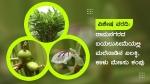 ರಾಮನಗರ: ಬಯಲುಸೀಮೆಯಲ್ಲಿ ಮಲೆನಾಡಿನ ಏಲಕ್ಕಿ, ಕಾಳು ಮೆಣಸು ಕಂಪು