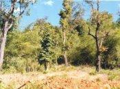 ಮಂಗನ ಕಾಯಿಲೆ, ಕಾಳ್ಗಿಚ್ಚಿನ ಭೀತಿ: ಮಳೆಗಾಲದವರೆಗೆ ಚಾರಣ ನಿಷೇಧ