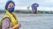 ಕಾಡಾನೆಗೆ ಸಿಹಿ ಪೊಂಗಲ್ ತಿನ್ನಿಸಿದ ಐಎಎಸ್ ಅಧಿಕಾರಿ