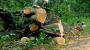 ಶಿರಸಿ-ಕುಮಟಾ ರಸ್ತೆ: ಹೈಕೋರ್ಟ್ ಅನುಮತಿ ಪಡೆಯದೇ ಮರ ತೆರವು