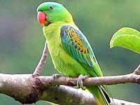 Parrot, the most beautiful and talked about bird