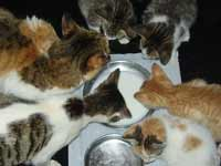 Seminar on rearing of cats and protection