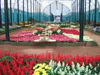 Flower show in Lalbagh, Bangalore