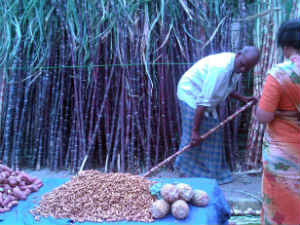 0114 Makara Sankranti Celebration In India Aid0038.html