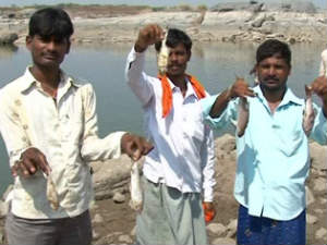 Mass murder of fishes in Bheema river