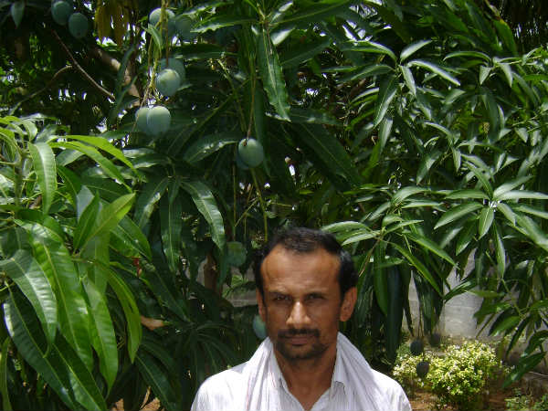 Siddaraju with his beloved Mango tree