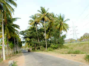 Fertile 79 acre land orphoned in Pandavapura, Mandya