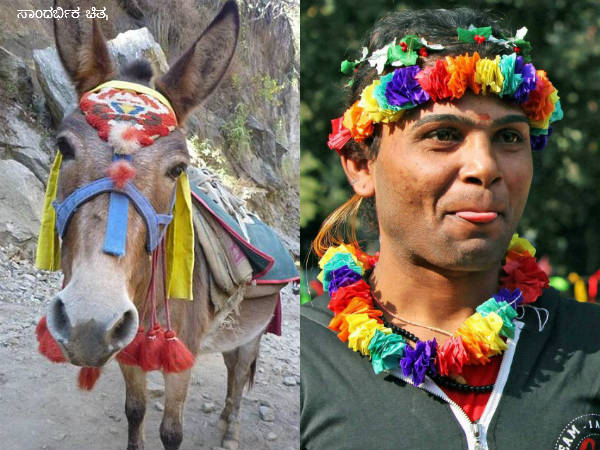 Why It Rains When Donkeys Are Married