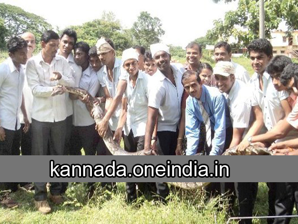 A Huge Python Found In Madhava Pai Collage Manipal 087135 Pg