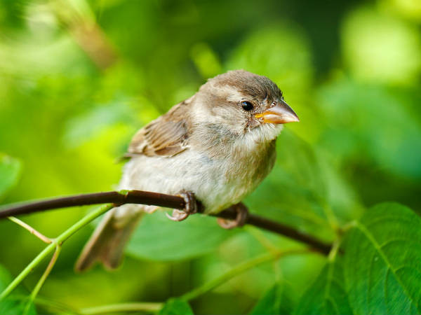 My Beloved Little Sparrow Where Are You