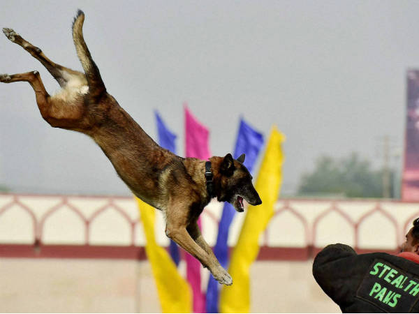What Indian Army does when dog retires or unfit to serve