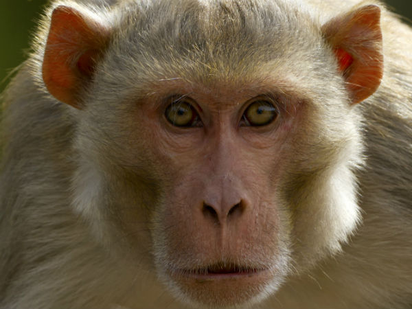 Kenya blames a monkey for 3-hour nationwide blackout