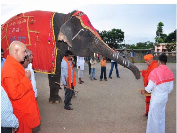 Sirigere Tarabalalu Mutt elephant popularly known as Gowri no more