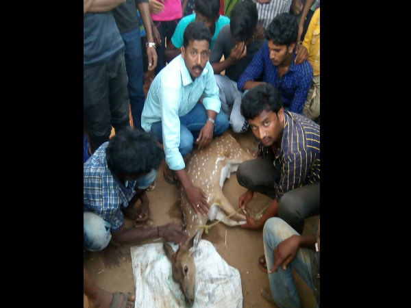 Youths saved deer life from street dogs in Hunsur, Mysuru