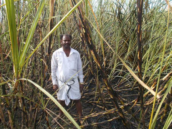 Sugar price may hike steeply in Karnataka
