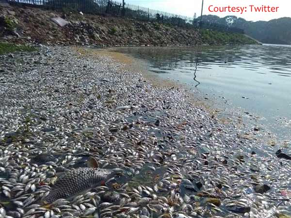 Bengaluru: Thousands of fish found dead in Ulsoor lake