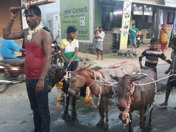 Villagers perform marriage of donkeys for rain