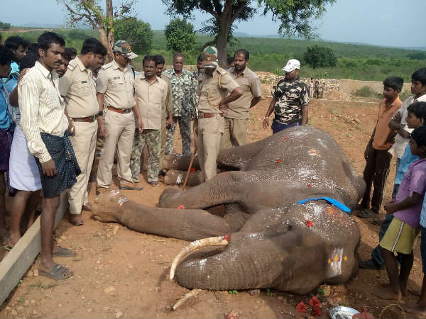 Wild elephant electrocuted, dies on the spot in HD Kote