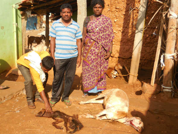 Leopard menace in Kundanahalli village in Mandya