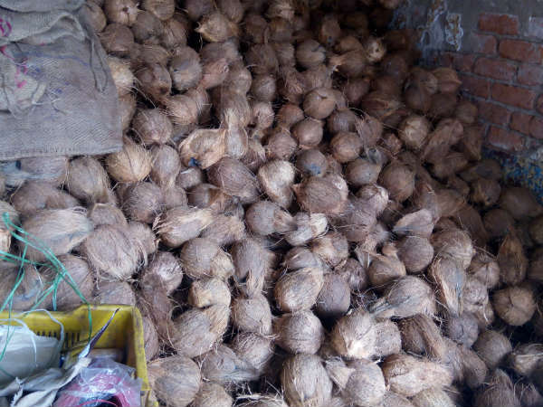 Why coconut price has fallen steeply in Karnataka