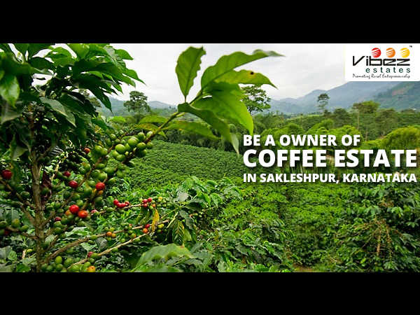 Own Your Coffee Estate In Western Ghats Sakaleshpur