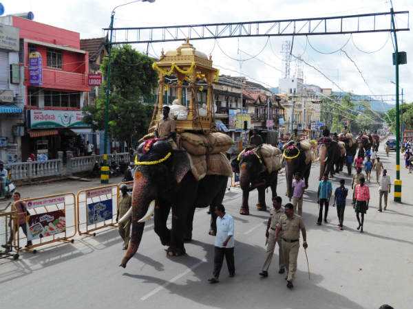 Dasara elephant troops insured for 32 lakhs