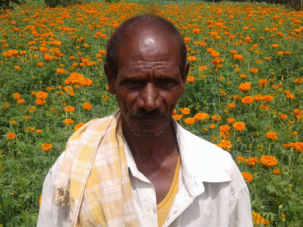 Hunsur farmers give up tobacco crop, grow Marigold