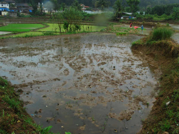 Monsoon weak in Madikeri, farmers are in worry