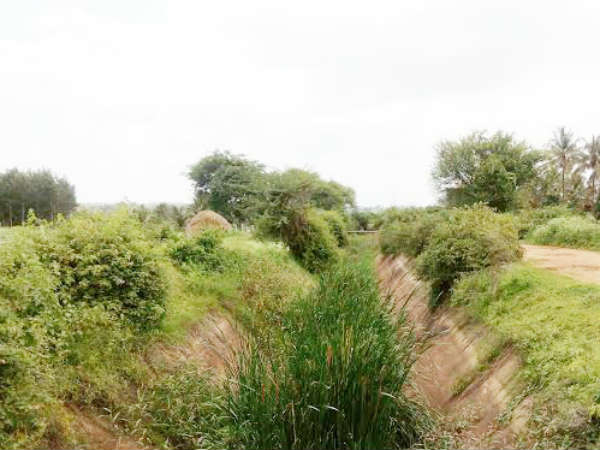 Neglected canal serving no purpose for farmers in Piriyapatna