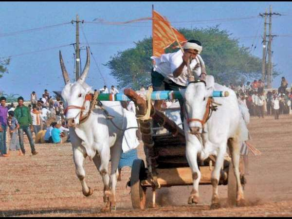 Know about Pola festival Maharashtra