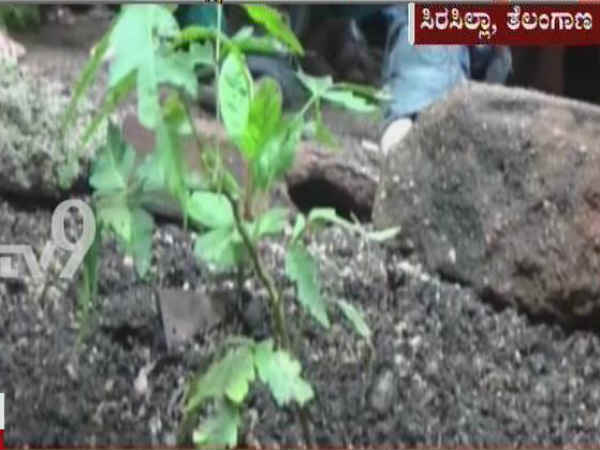 In a bizarre incident Neem plant found rotating in Karim Nagar district of Telangana