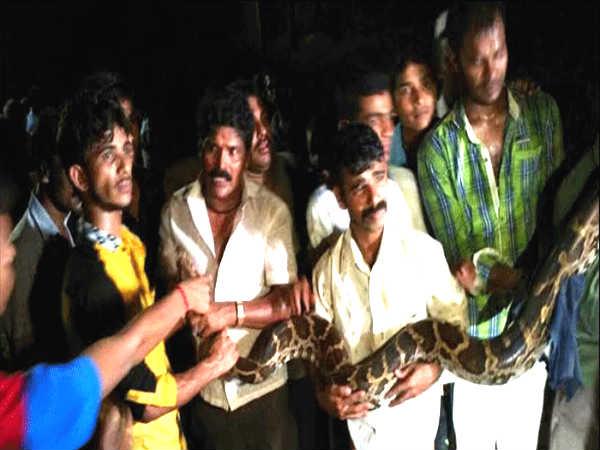 ಮಂಗಳೂರು: 11ರ ಪೋರ ವೈಶಾಖ್ ಗೆ ಕಚ್ಚಿದ್ದ ಹೆಬ್ಬಾವು ಸೆರೆ