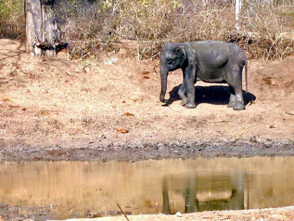Water crisis in forest, major threat to wildlife
