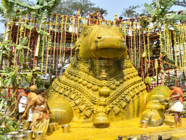 Mahabhisheka to Chamundi Betta Nandi statue for rain