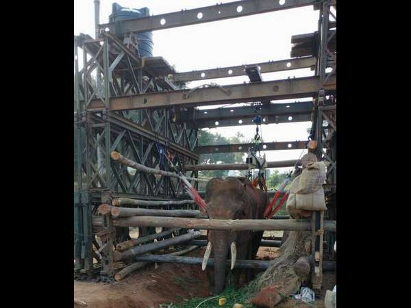 Elephant sidda ready for the recovery