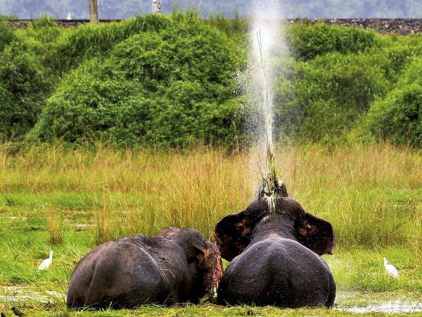 The Few Sentences About Elephant In Kannada {Forum Aden}