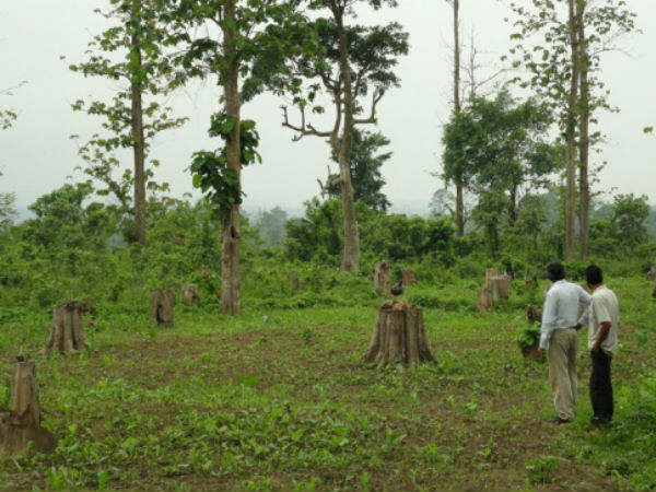 Western Ghats to lose 30,000 trees
