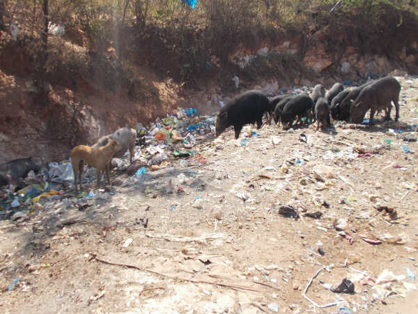 Many stray dogs dead in Hubballi