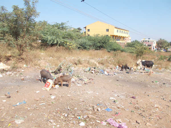 Several stray dogs dead in Hubballi