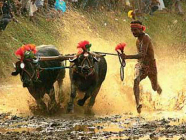 Kambala: let's not kind of parasitic growth methods  Devanuru Mahadeva